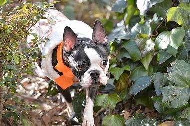 f:id:dog_life_saving:20180205131204j:image