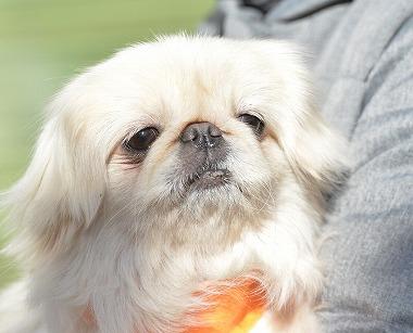 f:id:dog_life_saving:20180205131213j:image