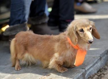 f:id:dog_life_saving:20180306131604j:image