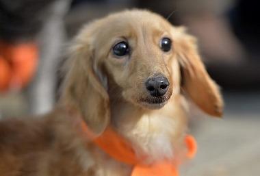 f:id:dog_life_saving:20180306131606j:image