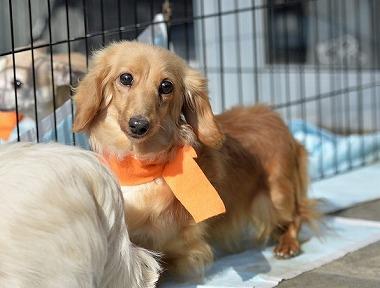 f:id:dog_life_saving:20180306131609j:image