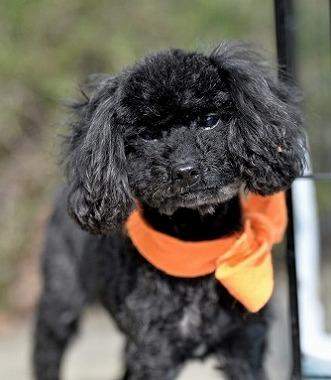 f:id:dog_life_saving:20180306132924j:image
