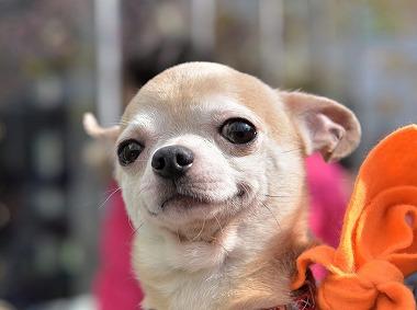f:id:dog_life_saving:20180306134255j:image
