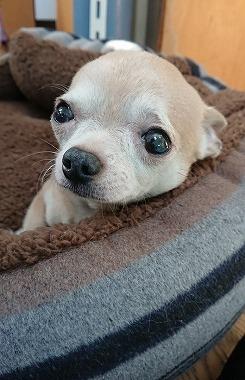 f:id:dog_life_saving:20180306134258j:image