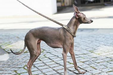 f:id:dog_life_saving:20180319123742j:image