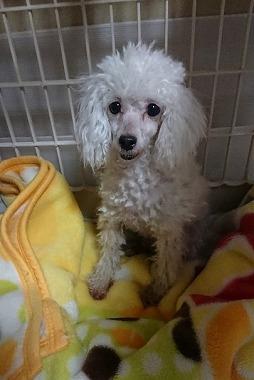 f:id:dog_life_saving:20180319123748j:image