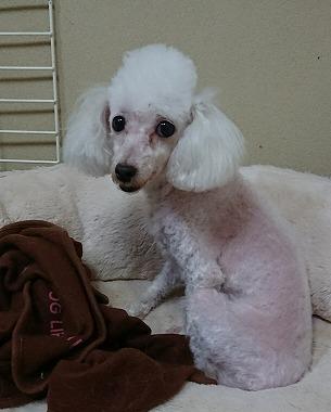 f:id:dog_life_saving:20180319125058j:image
