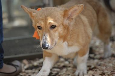 f:id:dog_life_saving:20180329093341j:image