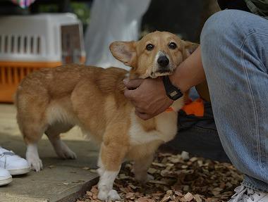 f:id:dog_life_saving:20180329093343j:image