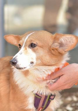 f:id:dog_life_saving:20180329093347j:image