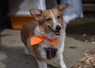 f:id:dog_life_saving:20180329093348j:image