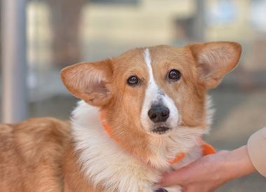 f:id:dog_life_saving:20180329093349j:image