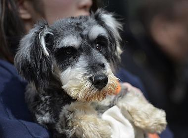 f:id:dog_life_saving:20180329093351j:image