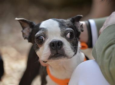 f:id:dog_life_saving:20180329093354j:image