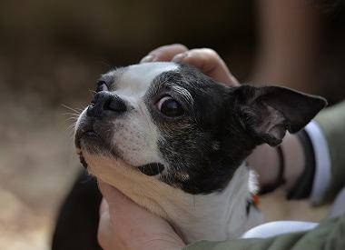 f:id:dog_life_saving:20180329093355j:image