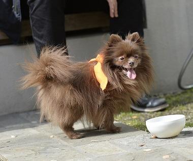 f:id:dog_life_saving:20180329093406j:image