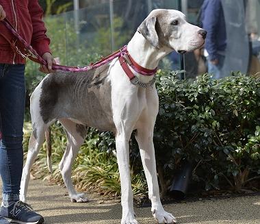 f:id:dog_life_saving:20180329093410j:image