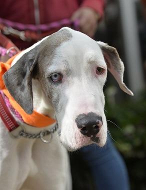 f:id:dog_life_saving:20180329093411j:image