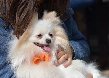 f:id:dog_life_saving:20180329104824j:image