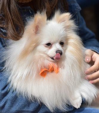 f:id:dog_life_saving:20180329104827j:image