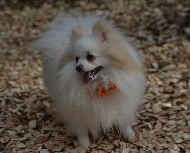 f:id:dog_life_saving:20180329104830j:image