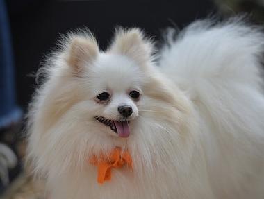f:id:dog_life_saving:20180329104834j:image