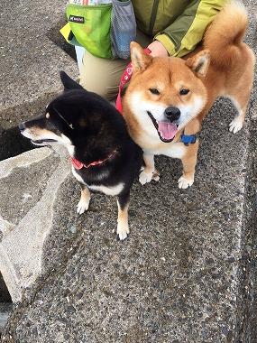 f:id:dog_life_saving:20180411145847j:image