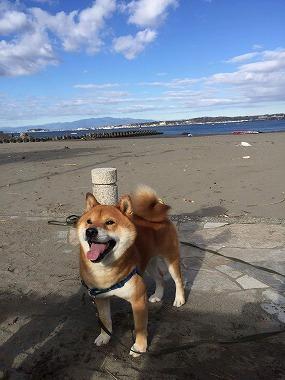 f:id:dog_life_saving:20180411145851j:image