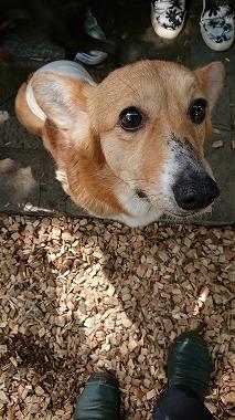 f:id:dog_life_saving:20180508150916j:image