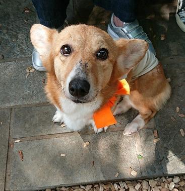 f:id:dog_life_saving:20180508150917j:image