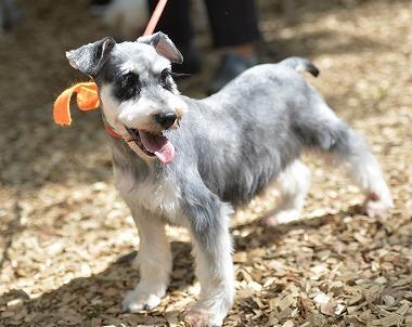 f:id:dog_life_saving:20180508150935j:image