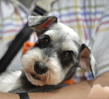 f:id:dog_life_saving:20180508150936j:image