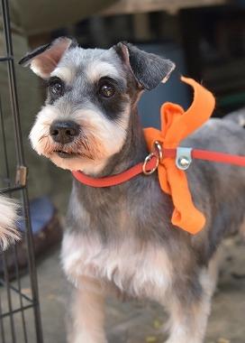 f:id:dog_life_saving:20180508150940j:image