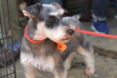 f:id:dog_life_saving:20180508150942j:image