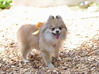 f:id:dog_life_saving:20180508150949j:image