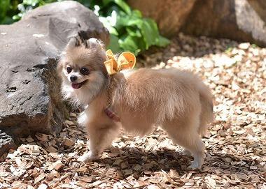 f:id:dog_life_saving:20180508150950j:image