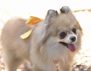 f:id:dog_life_saving:20180508150951j:image