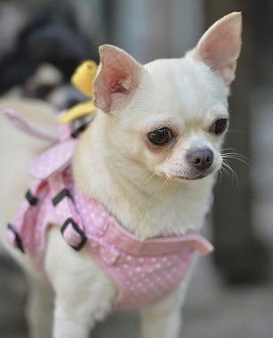f:id:dog_life_saving:20180508151003j:image
