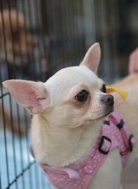 f:id:dog_life_saving:20180508151005j:image