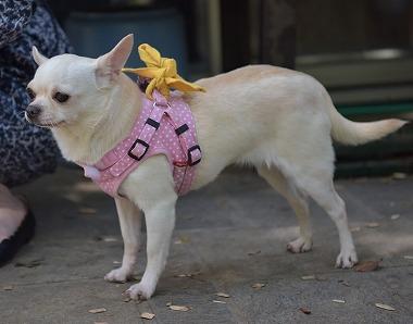 f:id:dog_life_saving:20180508151006j:image