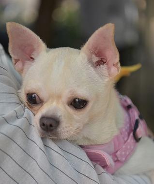 f:id:dog_life_saving:20180508151008j:image