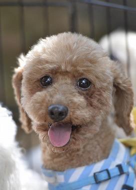 f:id:dog_life_saving:20180508151013j:image