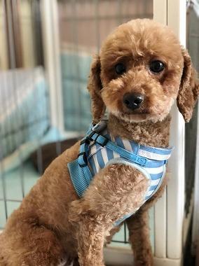 f:id:dog_life_saving:20180508151016j:image
