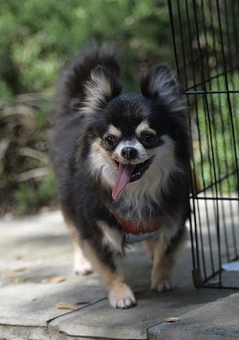 f:id:dog_life_saving:20180508151020j:image