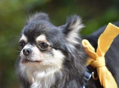 f:id:dog_life_saving:20180508151021j:image