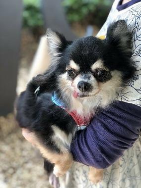f:id:dog_life_saving:20180508151022j:image