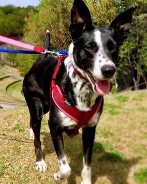 f:id:dog_life_saving:20180508151023j:image
