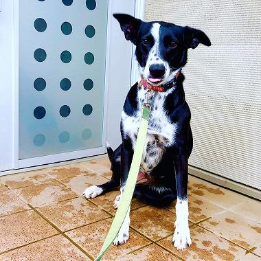 f:id:dog_life_saving:20180508151024j:image
