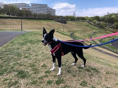 f:id:dog_life_saving:20180508151025j:image