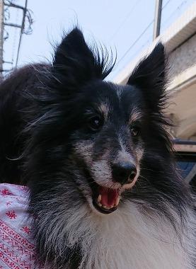 f:id:dog_life_saving:20180515113703j:image